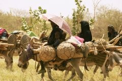 Fulani on the move